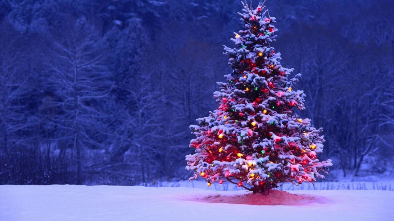 Árbol de Navidad ¿Por que se decora? - Luces de Navidad